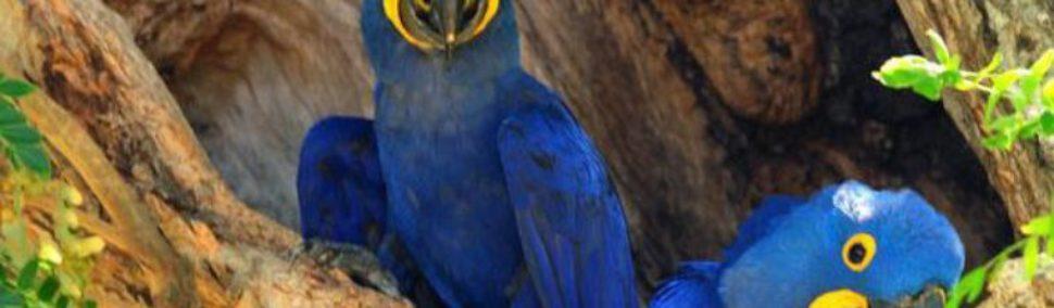 Hallan en México nueva especie de loro con un peculiar plumaje