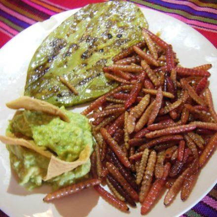 5 INSECTOS QUE SE COMEN EN MÉXICO